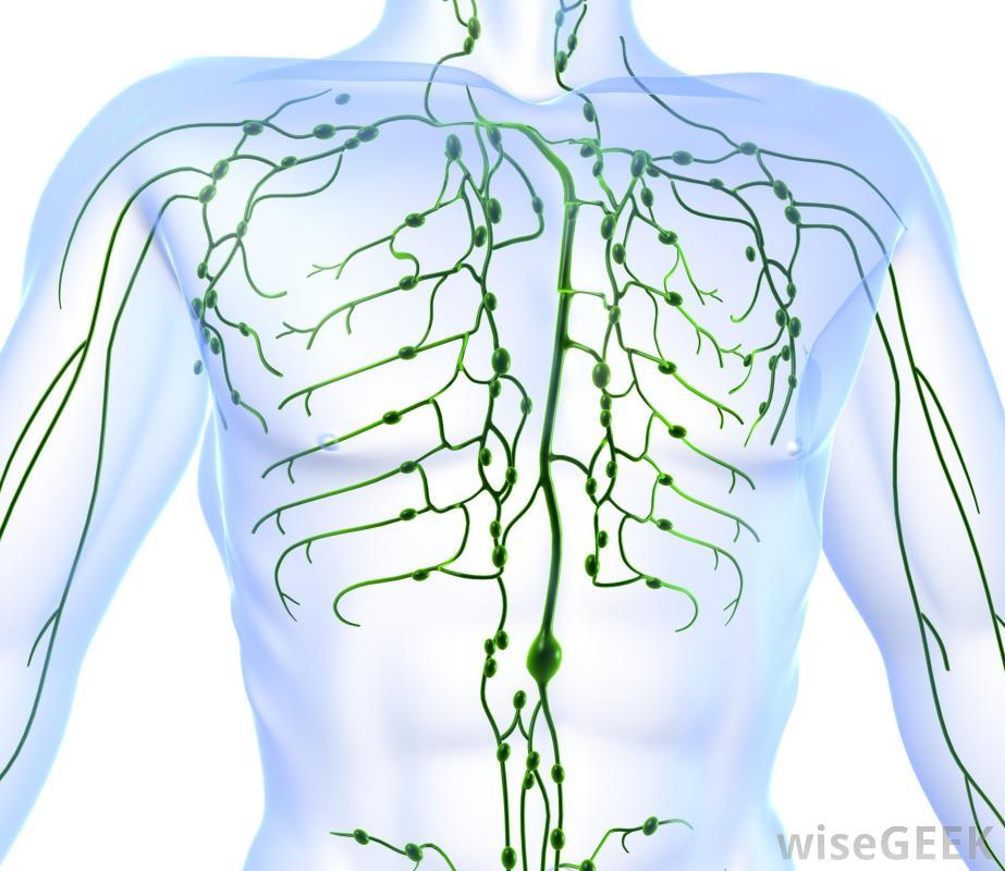sistema linfatico